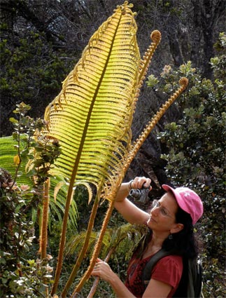 Andrea Pro taking a picture of a Hawaiian Hapuu fern